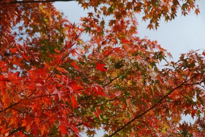 広瀬湖の秋59
