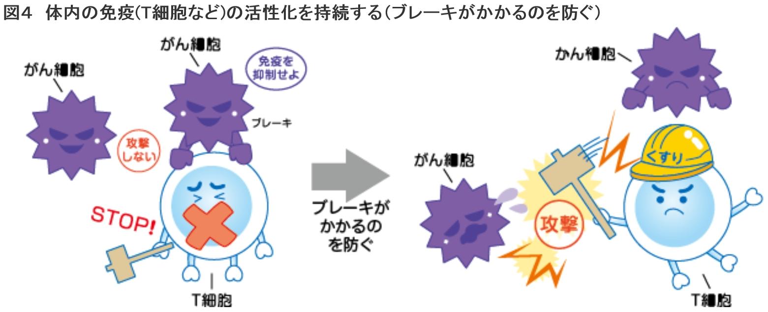 T細胞の免疫抑制を防ぐ仕組み