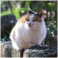 180101E 021猫SQ