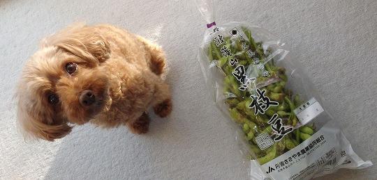 171023丹波黒豆