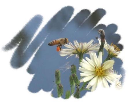 ニホン蜜蜂 009