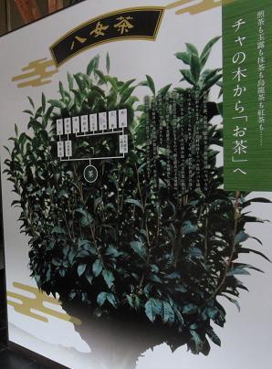 茶の文化館・月 040