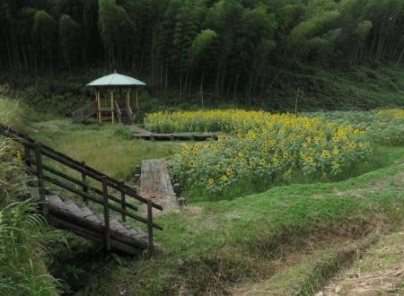 愛土鳩平 山温泉 105
