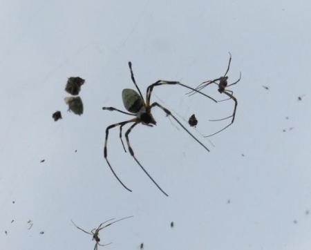 お月様と蜘蛛 021
