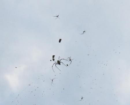 お月様と蜘蛛 022
