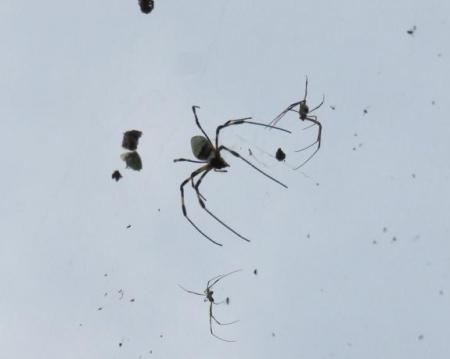 お月様と蜘蛛 020