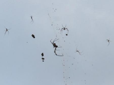 お月様と蜘蛛 019