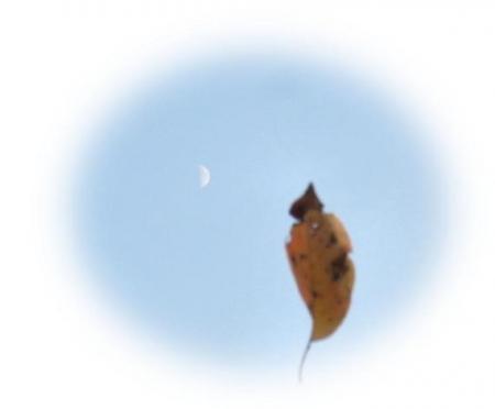 お月様と蜘蛛 030