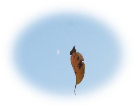 お月様と蜘蛛 033