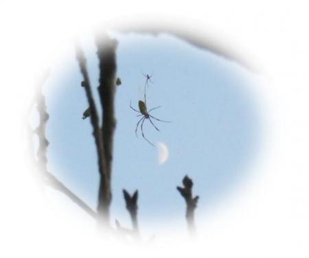 お月様と蜘蛛 039