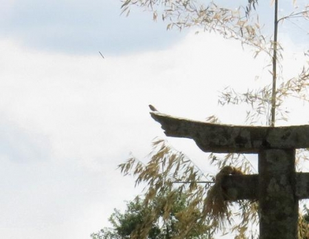 紋付鳥と電車 063