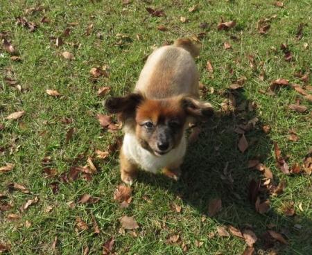 ウラギンシジミ犬 066