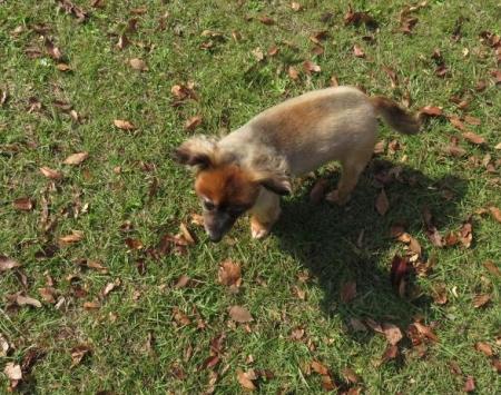 ウラギンシジミ犬 065