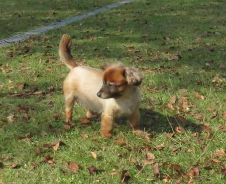 ウラギンシジミ犬 060