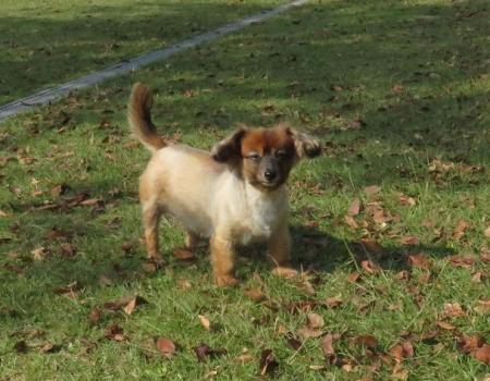 ウラギンシジミ犬 059