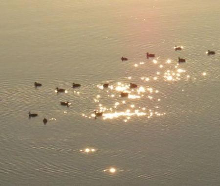 筑後川の朝日とお月さん 085