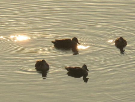 筑後川の朝日とお月さん 089