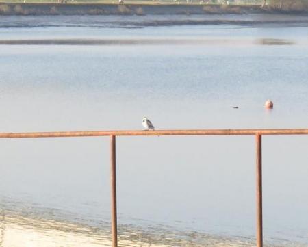 筑後川の朝日とお月さん 129