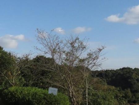 アサヒと清水山 073