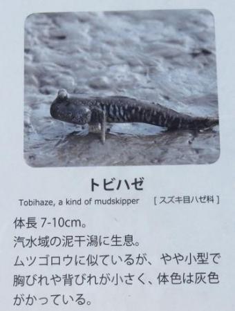 シツメン草 040