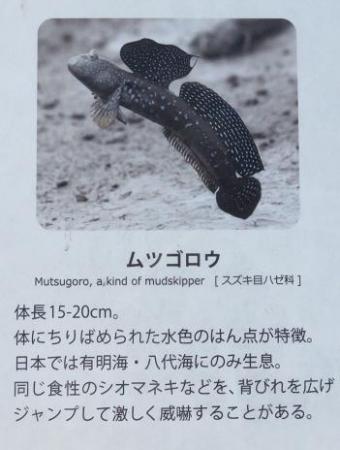 シツメン草 039