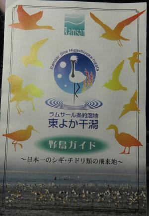 水鳥 006