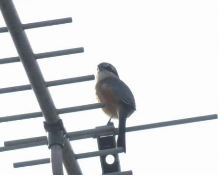 猛禽鳥 002