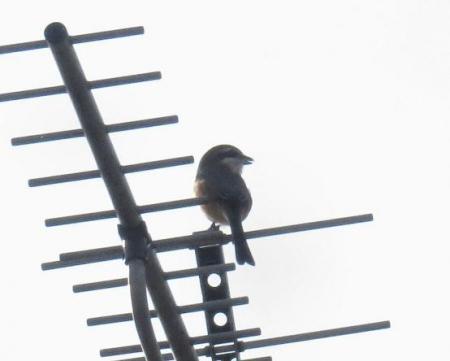 猛禽鳥 001
