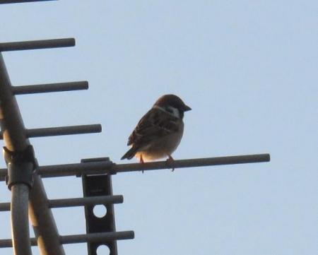栂尾の野鳥 004