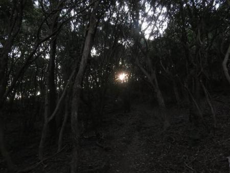 アサヒと清水山 032