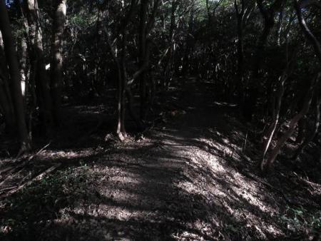 アサヒと清水山 051