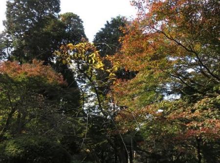 アサヒと清水山 097