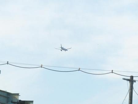 飛行機アオサギ 004