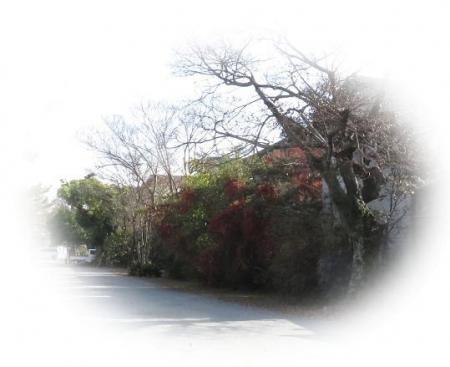 瞑想アオサギ・赤い実ヒヨドリ(追加) 027