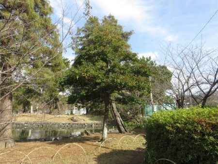 瞑想アオサギ・赤い実ヒヨドリ(追加) 031