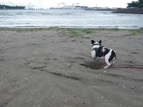 近くの海の公園だい