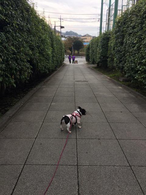 散歩してても風がつめいたい