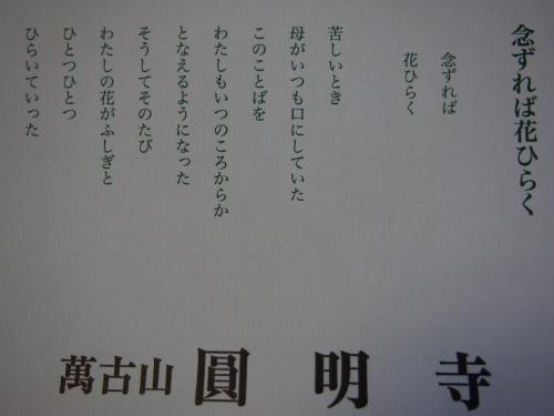 P1130135(2).jpg