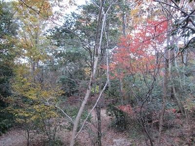 18.12.2山荘の紅葉 (3)-3
