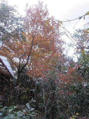 18.12.2山荘の紅葉 (8)-8