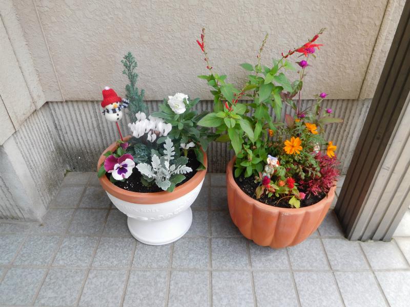 ss-花鉢