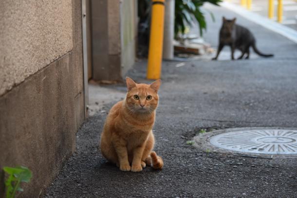 猫11,13