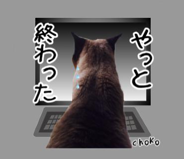 チョコちゃん(新潟在住)