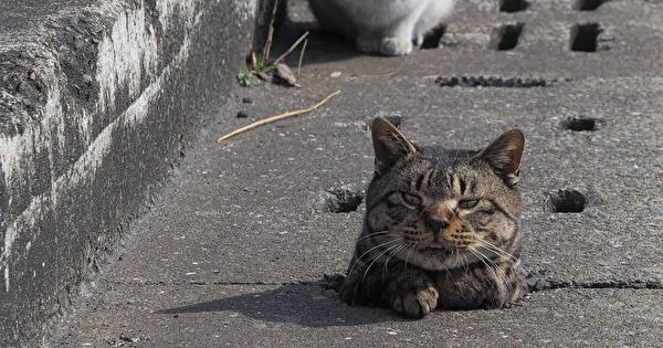 cat-i.png