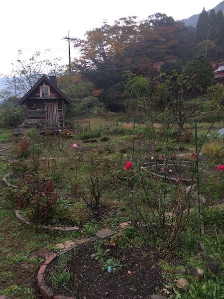 20171103花畑