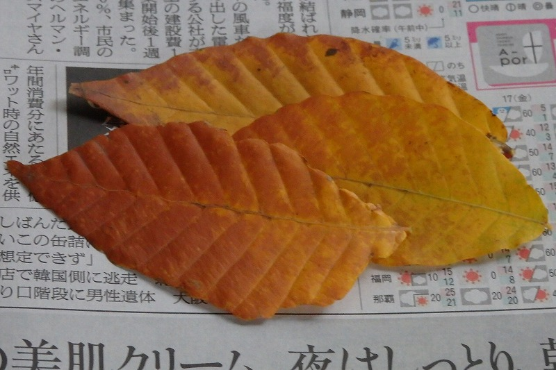 s-PB140360.jpg
