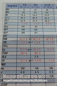 血液検査9月16日1