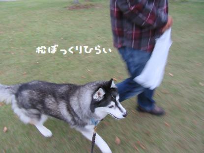 IMG_3339y.jpg