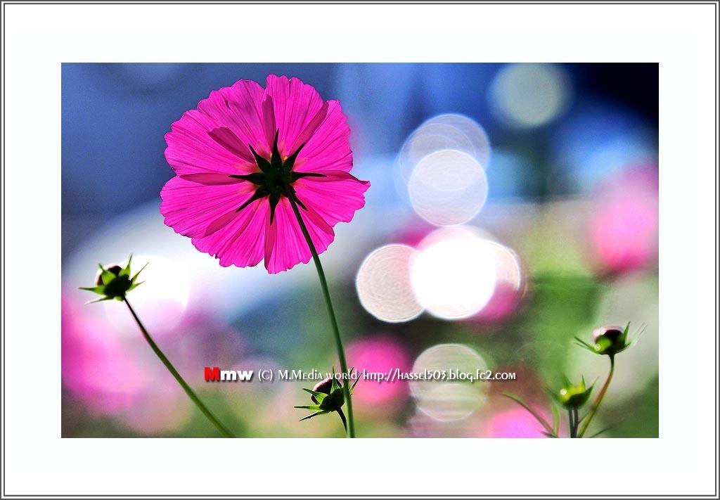 fc2_11_07.jpg