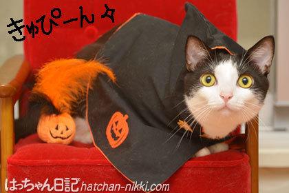 かわいいかぼちゃの